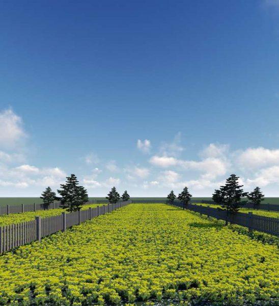 Bất động sản Lâm Đồng - Chuỗi Dự án Green Life 1 - Hạ tầng bàn giao